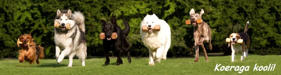 EKL atesteeritud koerakoolitaja